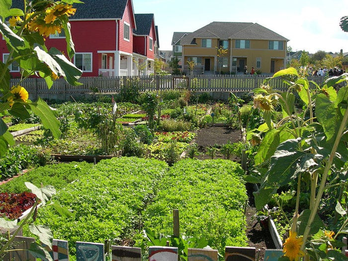 eco-trends-4-community-garden